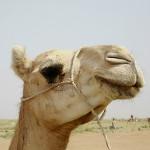 kamila simbolika