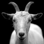 koza simbolika