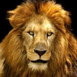 lav u alhemiji