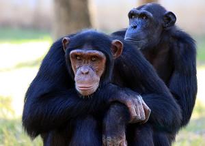 simbolika životinja: majmun