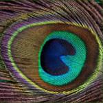 paunov rep kao alhemijski simbol