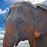 simbolizam životinja: slon