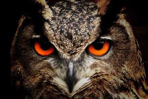 simbolika životinja: sova