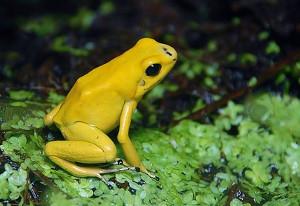 Žaba - značenje i verovanja