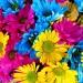 Odaberite Cvet Prema Mesecu Rođenja