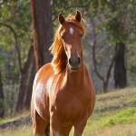 konj kao simbol